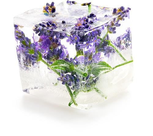 Lavender Cubes