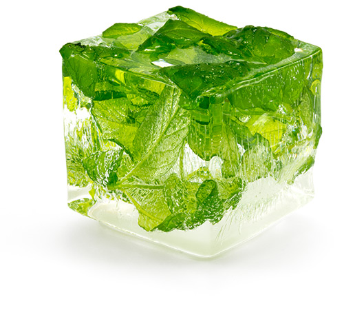 Fresh Mint Leaves in Clear Ice